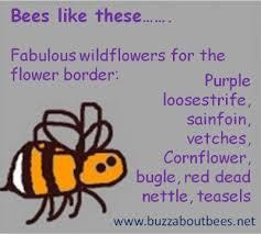 wildflowers bees like