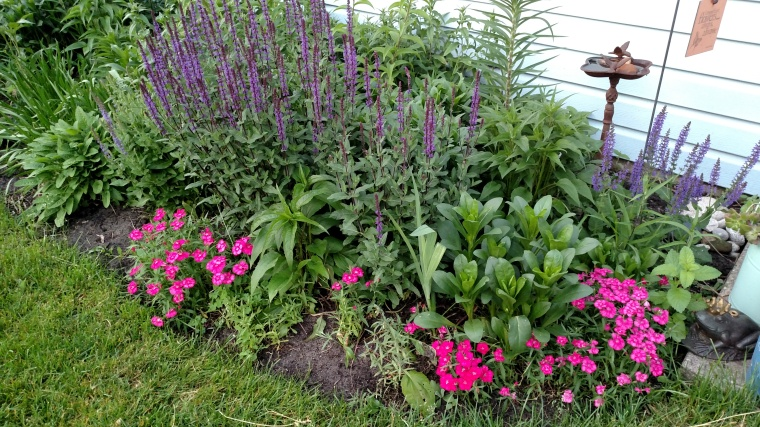June blooming