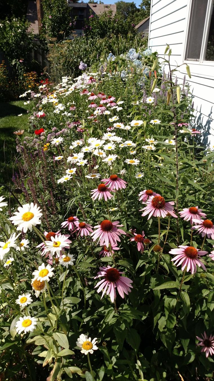 full bloom July