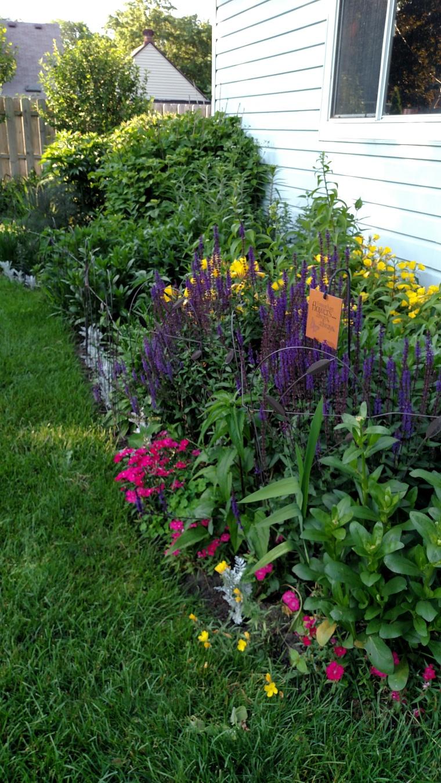 backyard early summer (2)