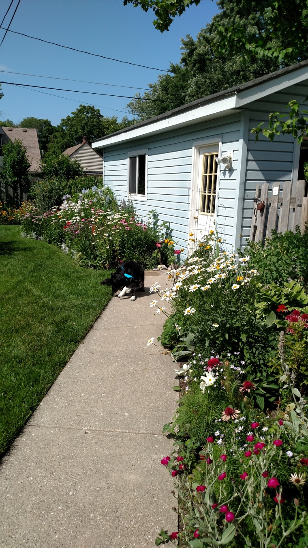backyard summer 2016 (16)